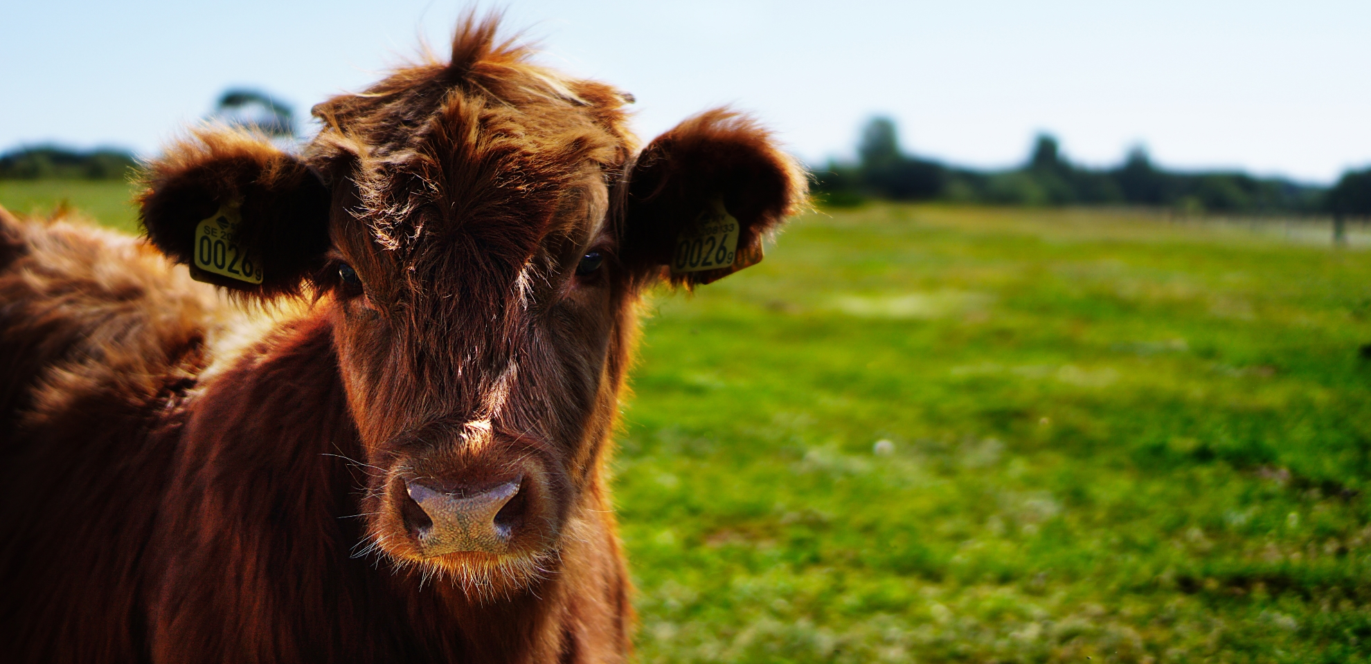 How Now Brown Cow: Three Small Business Lessons from the Milk Survey